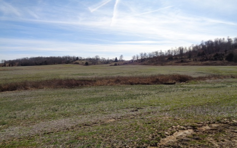 427 Mattingly Rd, Brownsville, Kentucky 42210, ,Agri/imp/unimp,Auction,Mattingly,20191377