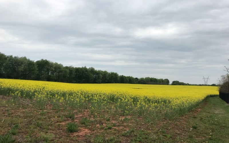 0 Louisville Road, Bowling Green, Kentucky 42101, ,General Tract - Vacant,For Sale,Louisville Road,20181660